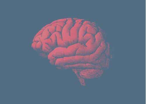 Ook de hersenen verouderen, maar waarom?