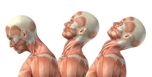 Goed voor je nek zorgen door bepaalde oefeningen te doen
