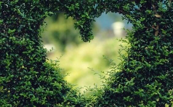Gat in de heg geknipt in de vorm van een hart