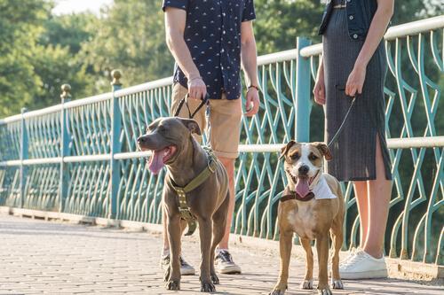 Twee mensen met hun honden op een brug