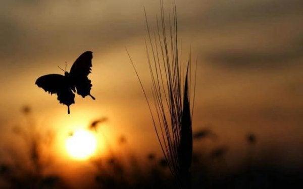 Vlinder bij zonsopgang