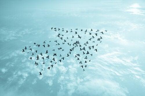 Vogels die een pijltje vormen, want als we ons dieptepunt bereiken weten we soms de weg niet meer