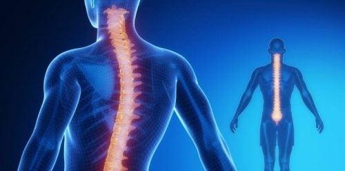 De anatomie en fysiologie van het ruggenmerg