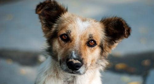 Het nieuwsgierige hondje: een mooi verhaal over zelfreflectie