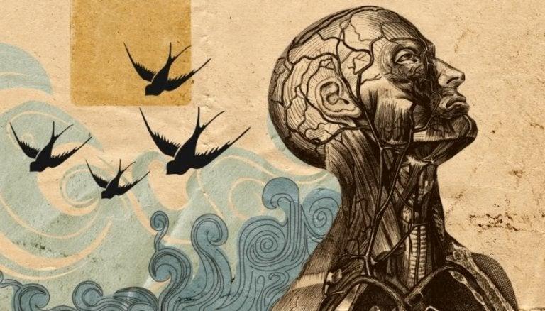 Humanistische psychologie geïllustreerd