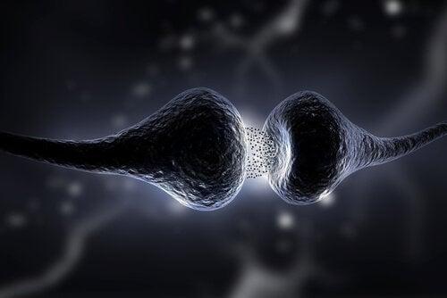 De invloed van neurotransmitters op de synapsen