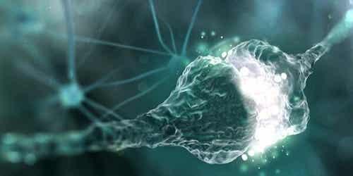 Wat is de synapsspleet en hoe werkt hij precies?