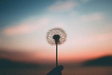 Wat is hoop