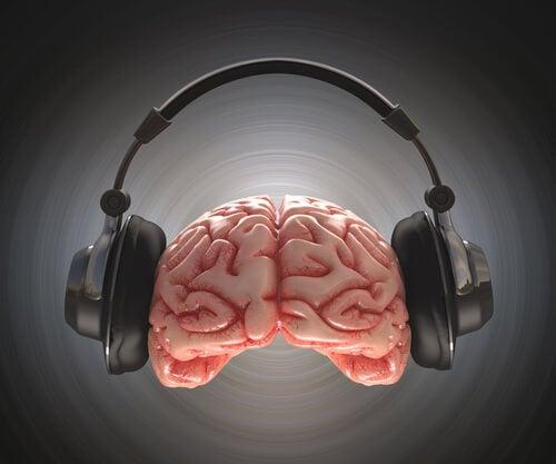Hersenen houden van muziek