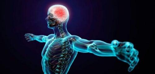 Voordelen uit de sportpsychologie beïnvloeden lichaam en geest