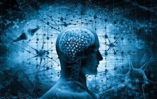 Hoe de hersenen in elkaar zitten