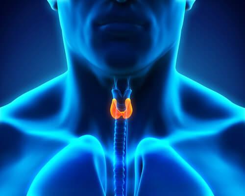 Soorten hormonen en de schildklier