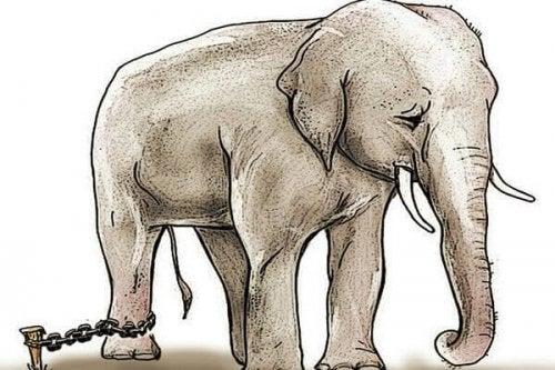 De geketende olifant