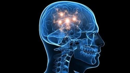De hersenen en zich tot risico's aangetrokken voelen