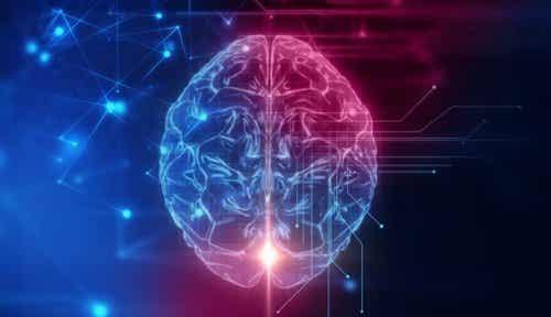 De orbitofrontale cortex: de basis van ons sociaal gedrag