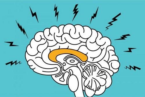 De rol van de amygdala