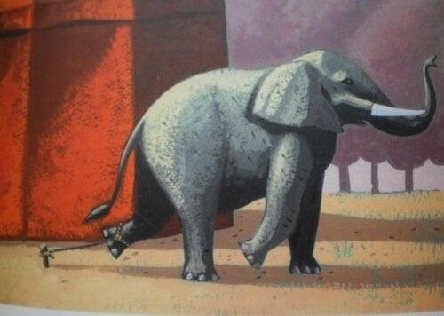 We vertellen je het bijzondere verhaal van de geketende olifant