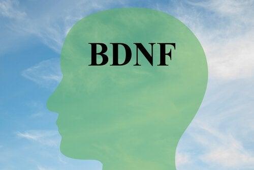 Leer hoe je je BDNF-gehalte kunt verhogen