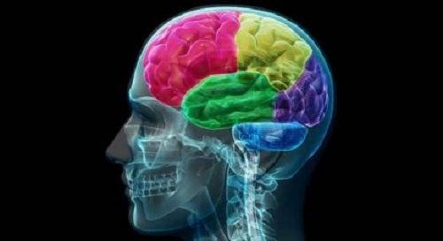 De hersenen van een verslaafde: de anatomie van dwang en behoefte