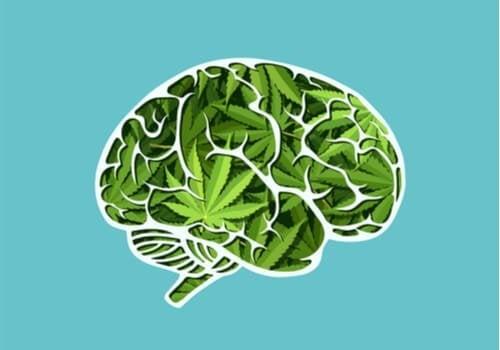 De langetermijneffecten van cannabis op de hersenen