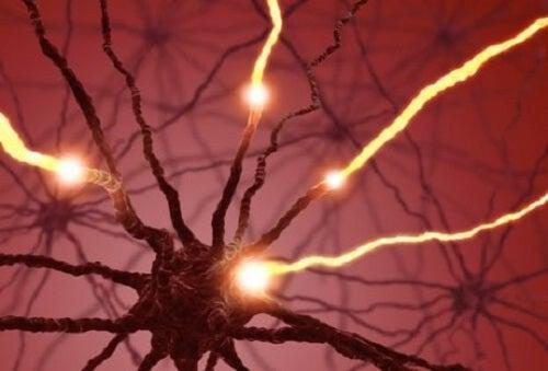 Waar gebeurt neurogenese