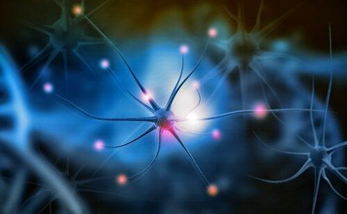 Wat is neurogenese precies en waarom is het belangrijk?