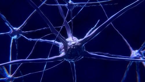 Wat zijn neuronen en hoe werken ze precies?