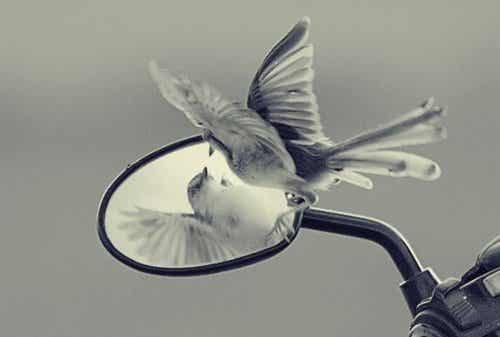 Ego-valstrikken die vrijheid en persoonlijke groei blokkeren