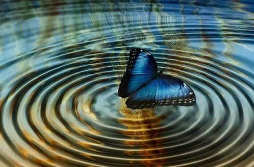 """Chaostheorie of """"het vlindereffect"""""""
