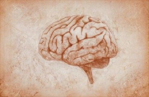 Het verband tussen lijden en de hersenen