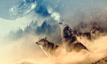 Wolfgeneeskunde volgens de indianen