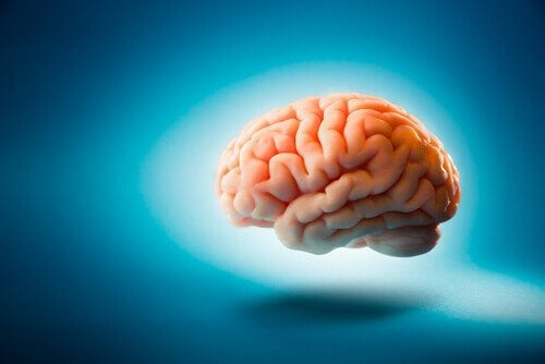 Hersenen tegen blauwe achtergrond