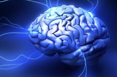 Het drievoudige brein