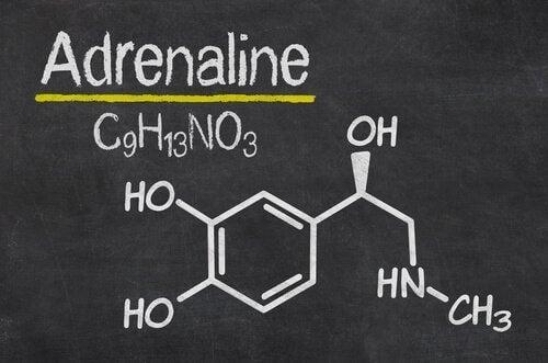 Adrenaline en de stressreactie