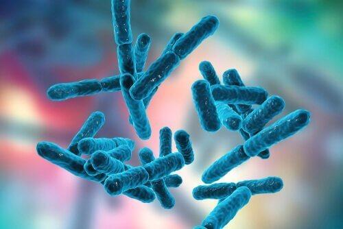 Bacteriën in het spijsverteringsstelsel