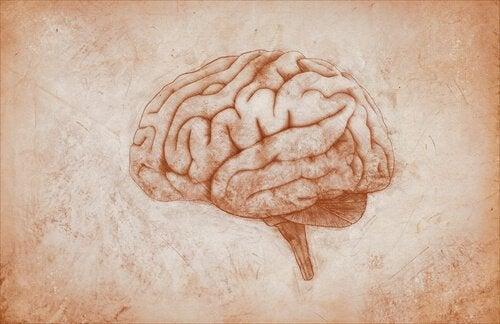 Tekening van hersenen