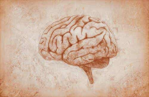 De motorische cortex: kenmerken en functies