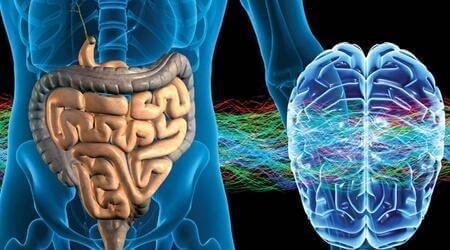 Het enterisch zenuwstelsel: het tweede brein