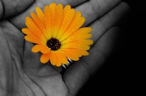 Open hand met gele bloem erin