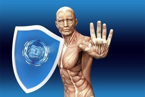 Hoe werkt het menselijk immuunsysteem?