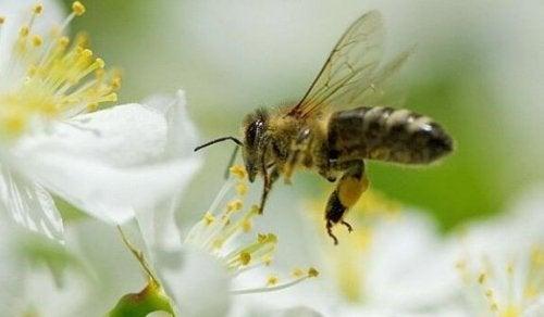 Vijf dingen die we van bijen kunnen leren