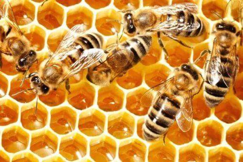 Bijen die honing maken