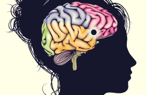 Nucleus accumbens: motivatie, genot en leervermogen