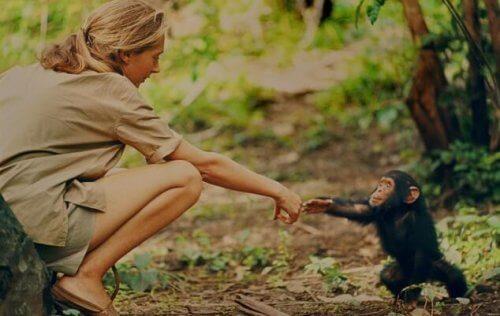 Jane goodall benadert chimpansee