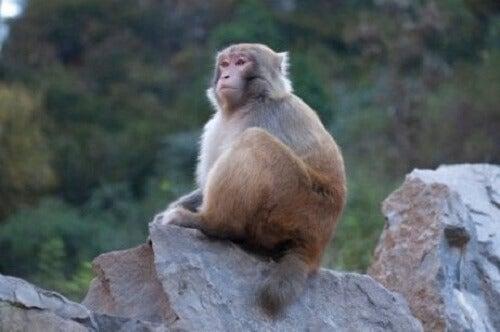 Onderzoeken over het bewustzijn van dieren