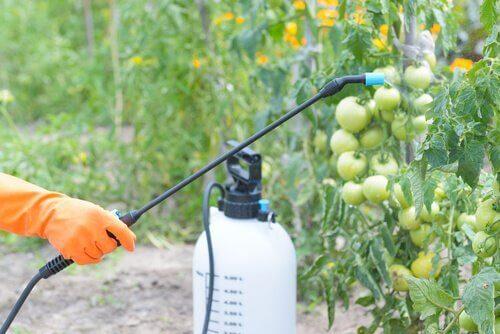Planten worden bespoten met bestrijdingsmiddelen