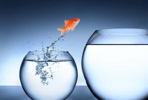Een goudvis springt naar een grotere kom