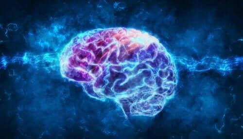 Een afbeelding van de hersenen en hersenstof