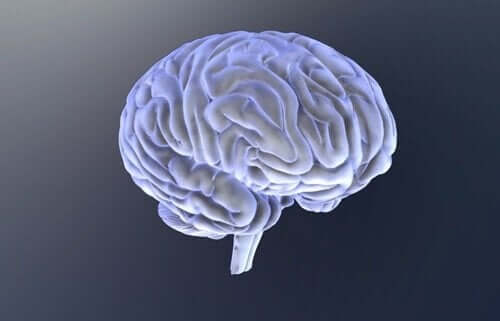 Een stel geïsoleerde hersenen