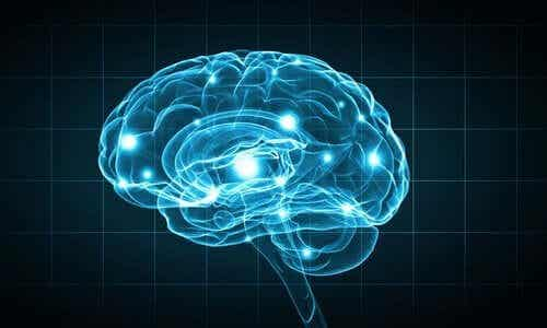 Biopsychologische onderzoeksmethoden